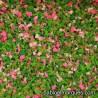 J-03 Jardín: flores rosas
