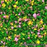 J-05 pink and yellow flowers