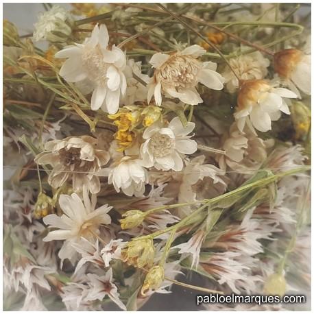 Flores Blanco / Natural