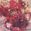 Flores Rojo / Rosa