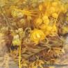 Flores Amarillo / Naranja