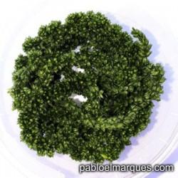 Planta trepadora: Verde oscuro